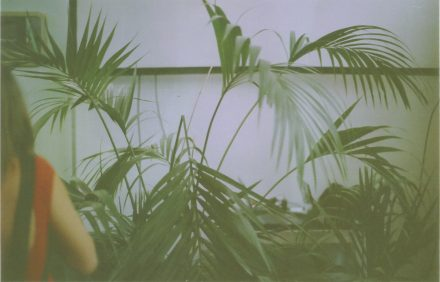Palmeras rojo